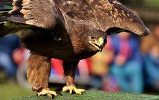 Free Beak, Bird, Bird Of Prey, Eagle Royalty Free Stock Images - 106402159