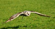 Free Bird, Ecosystem, Fauna, Beak Stock Images - 106402214