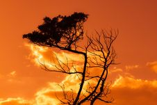 Free Sky, Cloud, Afterglow, Tree Royalty Free Stock Photography - 106402347