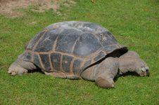 Free Tortoise, Turtle, Terrestrial Animal, Fauna Stock Photos - 106402473