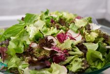 Free Dish, Salad, Food, Leaf Vegetable Stock Images - 106402634