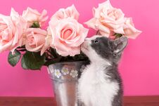 Free Cat Smelling Flower Roses On A Wooden Table And Pink Background Royalty Free Stock Photography - 106402987