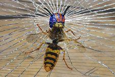 Free Invertebrate, Insect, Fauna, Arthropod Stock Images - 106403034
