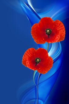 Free Flower, Poppy, Petal, Poppy Family Stock Photo - 106403120