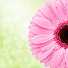 Free Flower, Flowering Plant, Pink, Gerbera Royalty Free Stock Photos - 106403178
