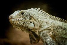 Free Reptile, Iguana, Scaled Reptile, Fauna Royalty Free Stock Images - 106403219