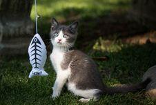 Free Cat, Fauna, Small To Medium Sized Cats, Cat Like Mammal Stock Photography - 106403632