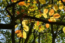 Free Leaf, Tree, Autumn, Branch Royalty Free Stock Photography - 106403877