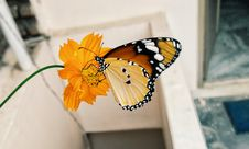 Free Shallow Focus Photography Of Brown Black And Yellow Butterfly On Yellow Flower Stock Photos - 106424303