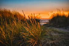 Free Green Grass Beside Sea Royalty Free Stock Photography - 106424347