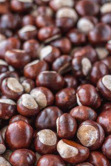 Free Chestnut, Nuts & Seeds, Nut, Superfood Stock Photo - 106444390