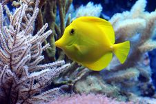 Free Fish, Ecosystem, Coral Reef Fish, Marine Biology Royalty Free Stock Photos - 106444528