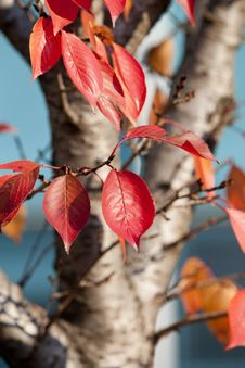 Free Red, Leaf, Autumn, Branch Stock Photos - 106444883