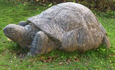 Free Tortoise, Turtle, Terrestrial Animal, Grass Royalty Free Stock Images - 106444979