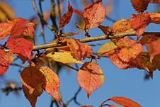 Free Leaf, Autumn, Branch, Deciduous Royalty Free Stock Photos - 106445098