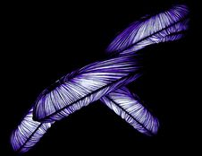Free Feather, Purple, Wing, Organism Stock Photos - 106445333