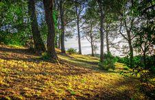 Free Nature, Tree, Woodland, Vegetation Royalty Free Stock Photography - 106445907
