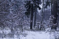 Free Animal Feeder In A Snow-covered Forest Royalty Free Stock Photography - 106703087