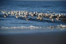 Free Seabird, Sea, Ocean, Water Royalty Free Stock Image - 106732396
