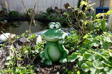 Free Frog, Amphibian, Toad, Plant Stock Photography - 106732542