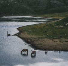 Free Wild Horses Royalty Free Stock Image - 106753806