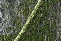Free Boat Rope Covered In Algae Stock Photo - 1070540