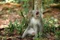 Free Monkey Series Stock Photos - 1077253