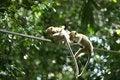 Free Monkey Series Stock Photo - 1077260