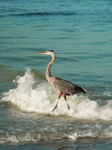 Free Heron On Beach Royalty Free Stock Photo - 1070365