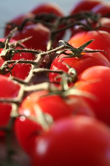 Free Cherry Tomatos Stock Images - 1070834