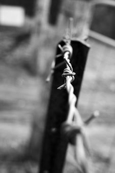 Free Barbed Wire Stock Photography - 1071192
