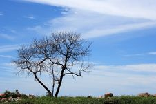 Free Lonely Tree Stock Photography - 1071292