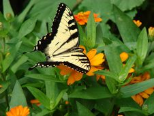 Free Butterfly On Flower Royalty Free Stock Photography - 1071397