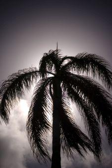 Free Hawaiian Palm Tree Royalty Free Stock Image - 1071986