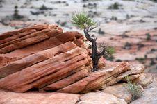Free Desert Detail Royalty Free Stock Images - 1073449