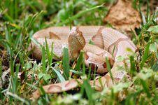 Free Brown Snake Royalty Free Stock Photo - 1074255