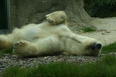 Free The Polar Bear Royalty Free Stock Photos - 1074898