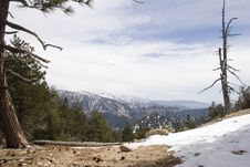 Free Angeles Crest Forest Royalty Free Stock Image - 1076196