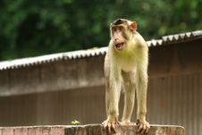 Free Monkey Series Stock Image - 1077231