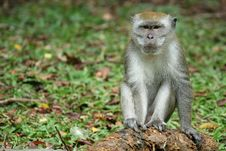 Free Monkey Series Stock Photography - 1077252