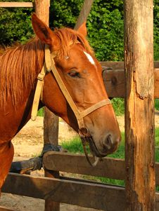 Free Horse Royalty Free Stock Images - 1077349