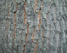 Free Tree Bark High Resolution Royalty Free Stock Image - 1078136
