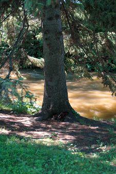 Free Tree Near Water Royalty Free Stock Image - 1079476