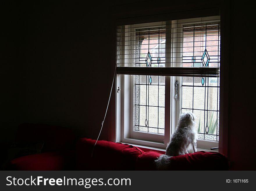 Dog s window