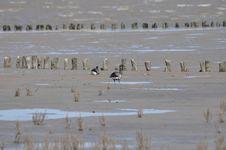 Free Mudflat, Bird, Fauna, Shorebird Stock Image - 107020281