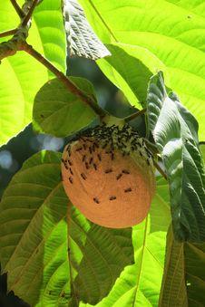 Free Leaf, Plant, Fruit, Fruit Tree Stock Photo - 107307070