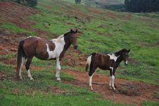 Free Horse, Horse Like Mammal, Pasture, Mare Royalty Free Stock Photography - 107307117