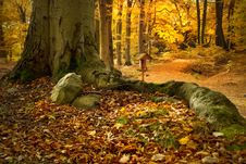 Free Nature, Woodland, Forest, Deciduous Stock Photography - 107365672