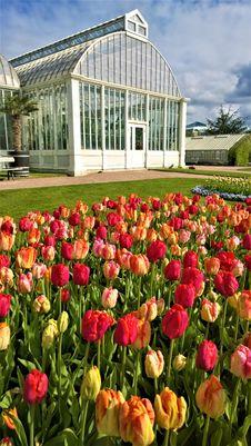 Free Flower, Plant, Flowering Plant, Botanical Garden Royalty Free Stock Images - 107374699