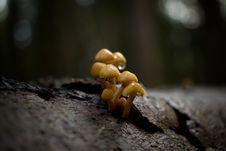 Free Fungus, Mushroom, Edible Mushroom, Medicinal Mushroom Stock Images - 107374784